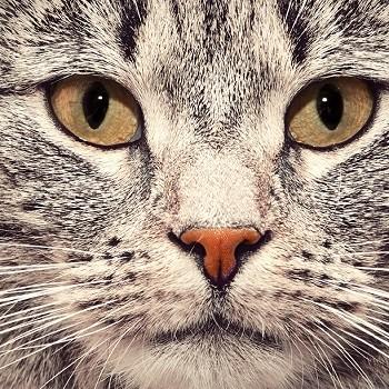 ČIČI kam se podíváš - kočičí speciál pro Vás